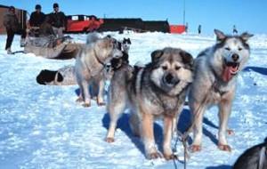 Hundeschlitten Touren im Yukon