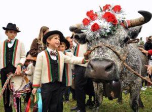Desarpa@turismoValledAosta-300x221 Das Aostatal kürt die Königin der Kühe