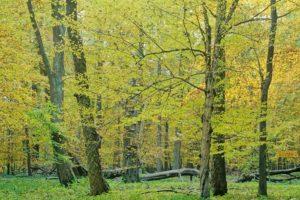 Herbst im Nationalpark Hainich