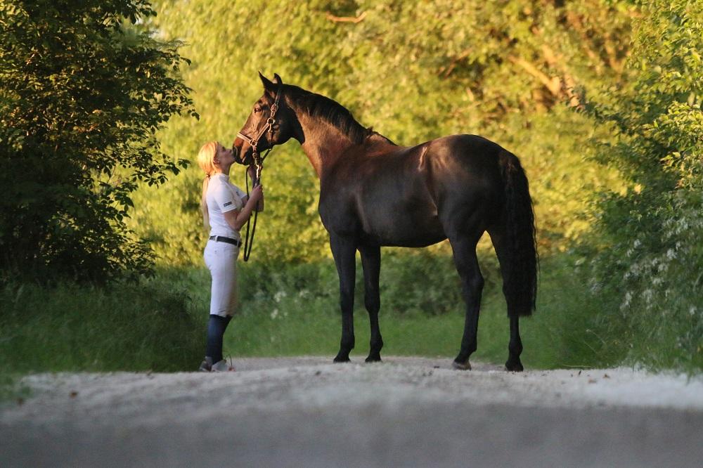 Pferdeeinäscherung – neu bei ANUBIS-Tierbestattungen