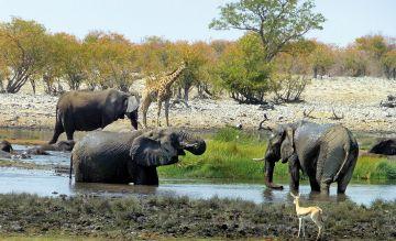 """Namibia mit """"Wow-Effekt"""": neuer Trip durch den unbekannten Norden"""