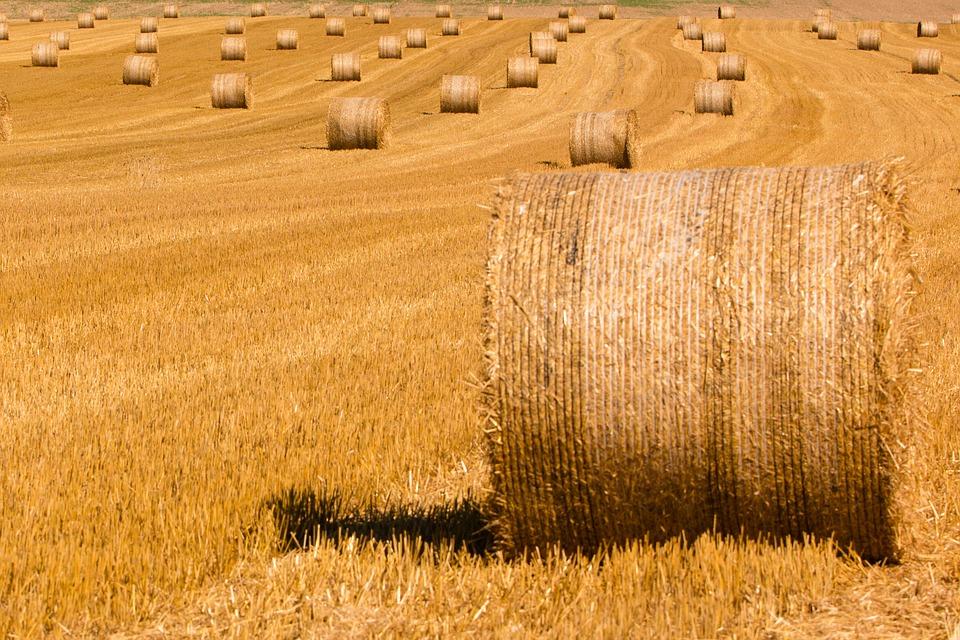 Baustoff Stroh: Abfallprodukt – nachhaltiges Bauen mit Stroh