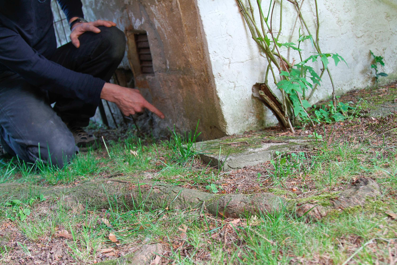 Mit Zerstörungskraft: Die Wurzeln in Nachbars Garten