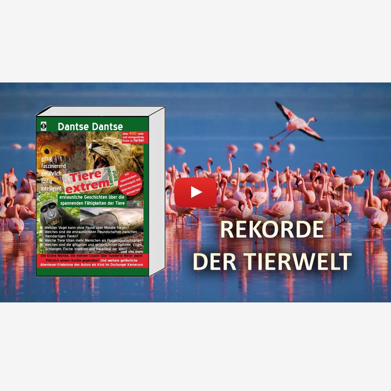 """Spannende Rekorde der Tierwelt – """"Tiere Extrem"""" von Dantse Dantse (Buchvorstellung) – indayi edition"""