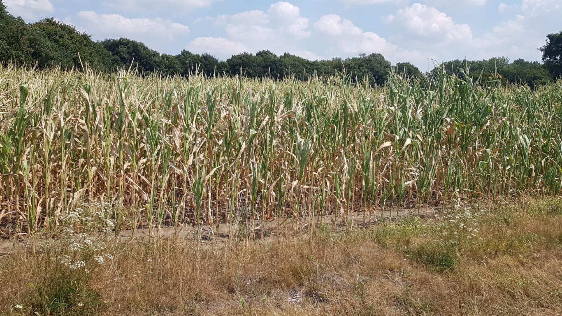 AGRAVIS-Spezial: Auswirkungen von Hitze und Trockenheit