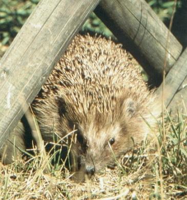 Ein unaufgeräumter Garten bietet Tieren Lebensraum