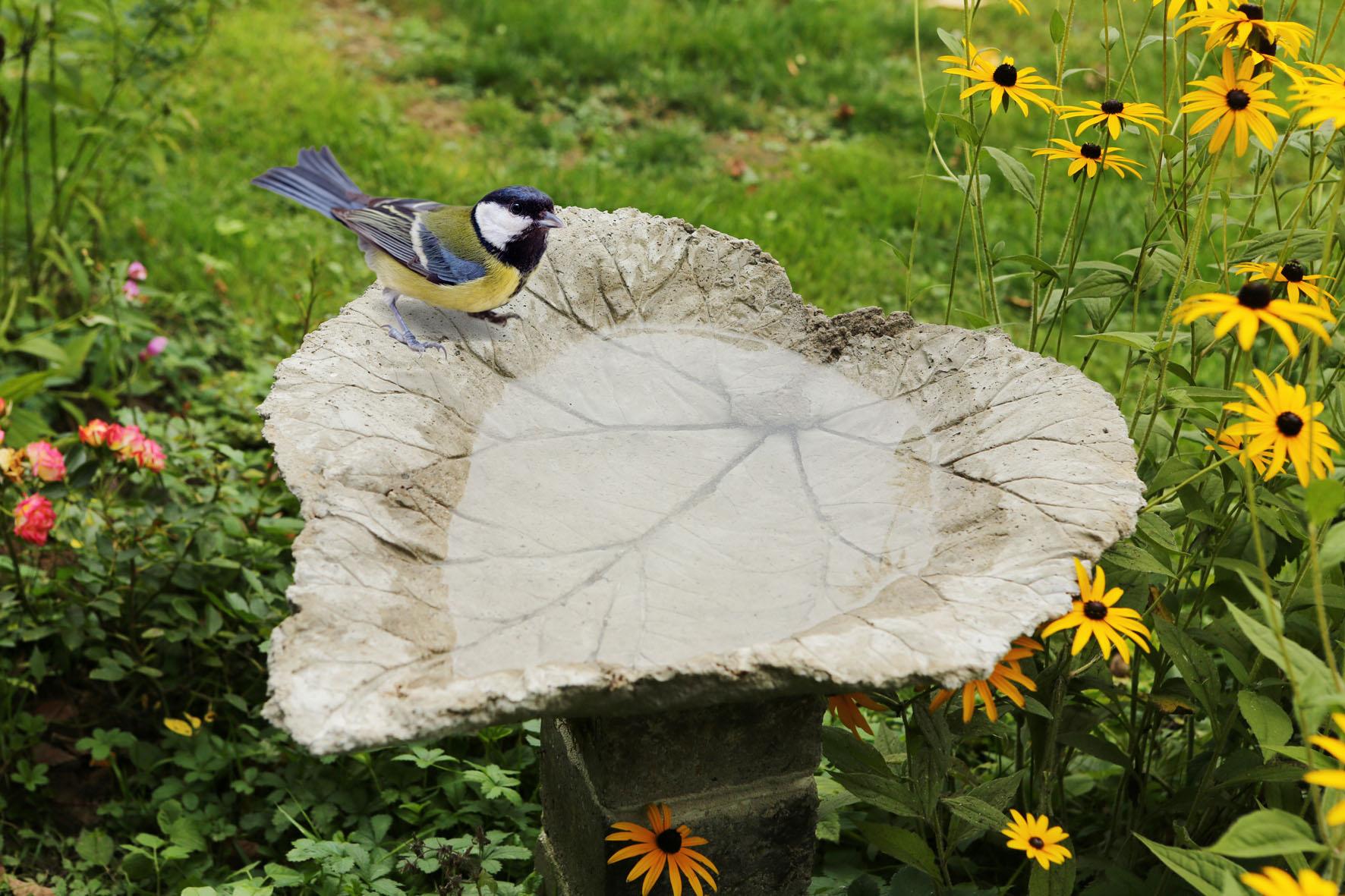 In 8 Schritten zur selbstgebauten Vogeltränke aus Beton