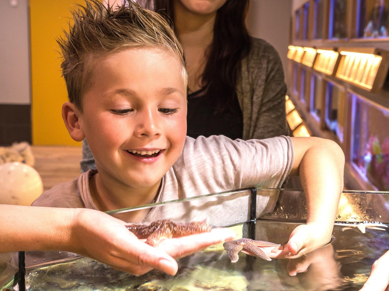Nordsee-Aquarium begeistert Gäste mit Aufzucht
