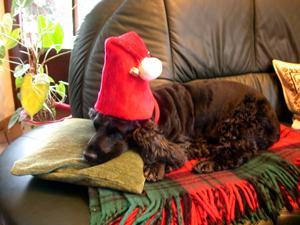 Risiken in der Adventszeit für Hund & Katz