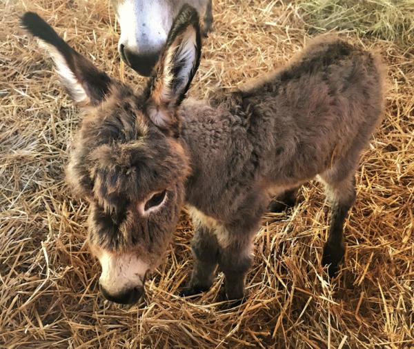 Harry und Sally – Zwei Eselbabys auf Gut Aiderbichl