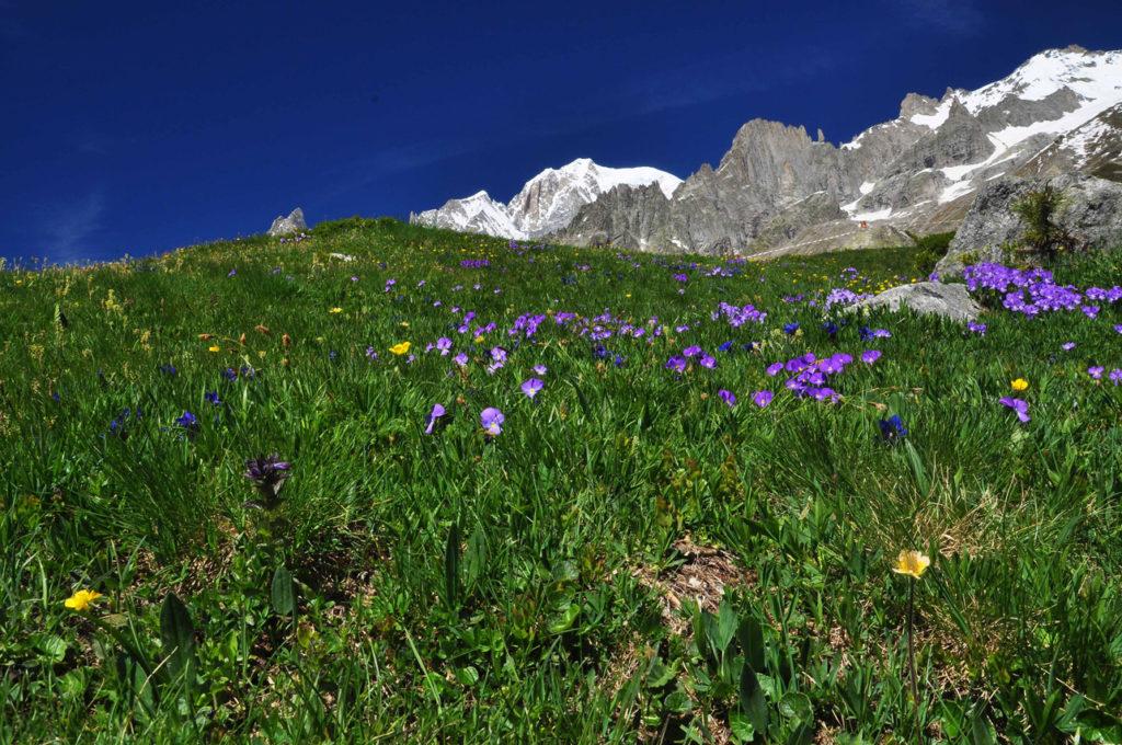 Primavera-Monte-Bianco_Aostatal-©Roberto-Maggioni_web-1024x680 Einladung zu Seelensuppe und Lebenselixier ins Aostatal